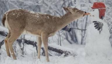 Deer&FriendCat