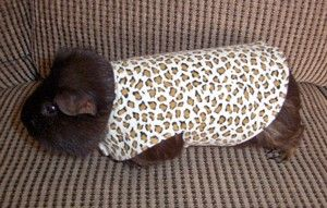 Guinne Pig Coats 2