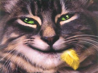 Funny Cats (2)