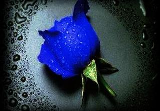 BlueRoseHonesty