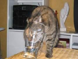 Catstuckinglass