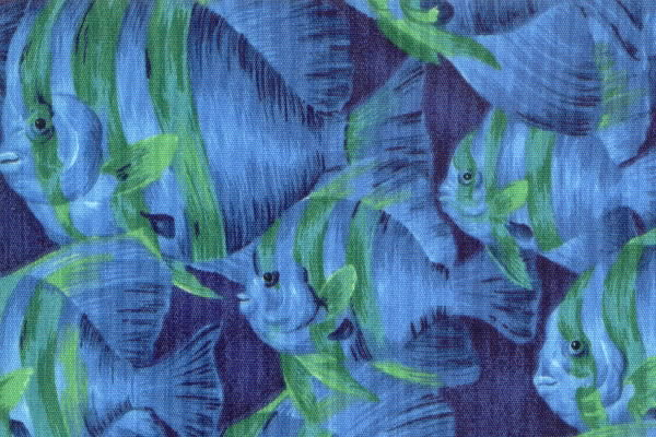 737_blue_fish