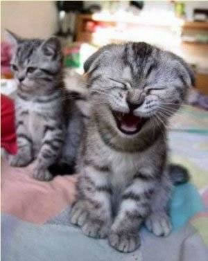 Kittenlauging