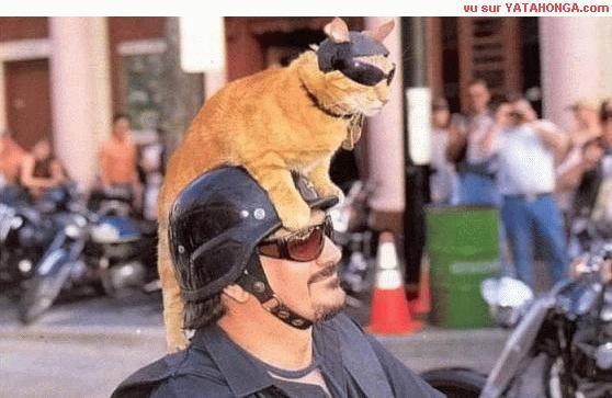 Biker_cat