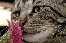 Smellingflowersalongtheway_2