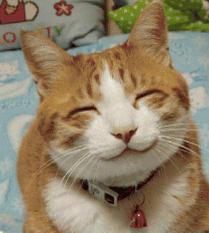 Smirkingcat