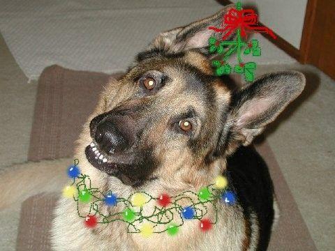 Vaderchristmas_elf